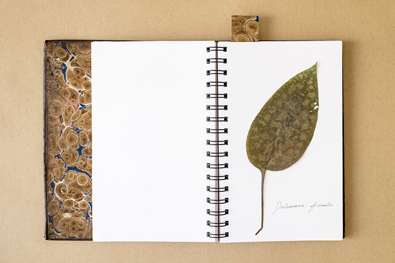 llibre_moreto2_blog